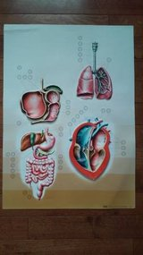 VINTAGE NOVA RICO ITALY 3D ANATOMY POSTER in Lockport, Illinois