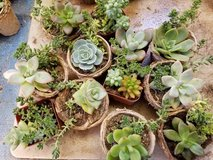 Succulents at lower prices in Camp Pendleton, California