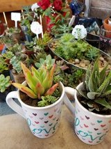 Love in a mug and other succulents at low prices in Camp Pendleton, California