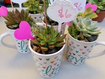 Blooming Succulents and other drought tolerant plants at low prices in Camp Pendleton, California