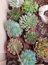 Healthy and low priced succulents and drought tolerant plants in Camp Pendleton, California