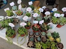 Succulents and drought tolerant plants at low prices in Camp Pendleton, California