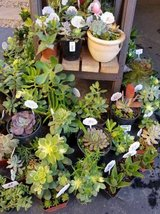 Healthy low priced succulents and drought tolerant plants in Camp Pendleton, California