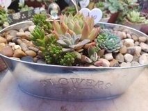 Succulents and arrangements at low prices in Camp Pendleton, California