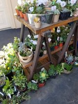 Society Garlic,Agapanthus,100's of succulents at lower prices in Camp Pendleton, California