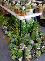 Low priced healthy succulents and drought tolerant plants in Camp Pendleton, California