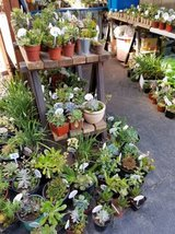 Low priced and large variety of healthy succulents and plants in Oceanside, California