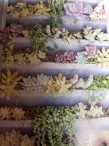 Succulents for verticals and other arrangements in Oceanside, California