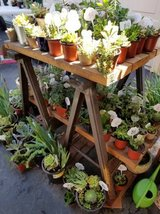100's of low priced succulents,Iris and Society Garlic plants in Oceanside, California