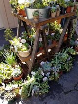 Succulents,Society Garlic, Iris,etc. lower than retail prices Open on Sunday too! in Oceanside, California
