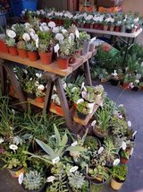 100's of lower than retail succulents and some drought tolerant plants in Oceanside, California
