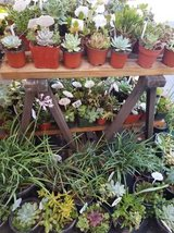 Open 9am-7pm every day of the week. Low priced succulents and drought tolerant plants in Camp Pendleton, California