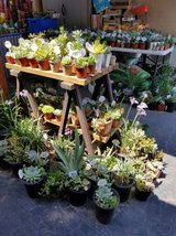 Lower than retail variety of succulents and drought tolerant plants in Oceanside, California