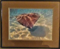 Deep See Stingray Photography Limited Edition Vintage in Lake Elsinore, California
