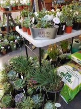 Succulents and plants below retail in Camp Pendleton, California