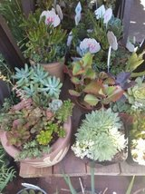 Open every day from 9am-6pm Sundays too! Succulents at low prices in Oceanside, California