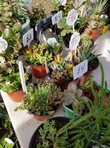 Variety of succulents and plants at lower than retail prices in Oceanside, California