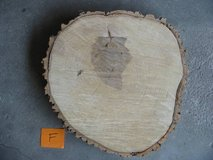 Ash wood slab slice LARGE 16-17 in rustic wedding cake centerpiece in Fort Carson, Colorado