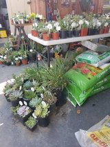 Open every day until 5:30pm Succulents and plants below retail in Oceanside, California