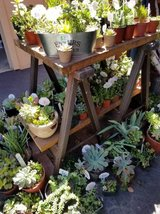 Open on Sunday until  4:30pm Lower than retail succulents in Camp Pendleton, California