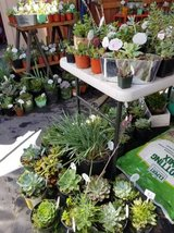 Wide variety of lower than retail succulents and plants in Camp Pendleton, California