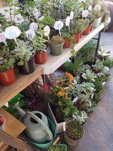 Succulents at lower than retail prices in Oceanside, California