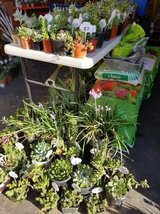 Open every day from 9am-5:30pm Sundays too! Succulents at low prices in Oceanside, California