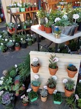 Good variety of low priced succulents and arrangements in Camp Pendleton, California