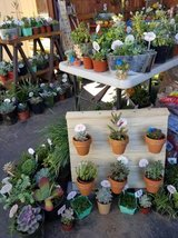 Succulents,arrangements and pumpkins with succulents at low prices in Oceanside, California