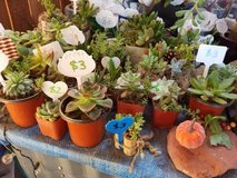 Succulents,Pumpkin and cork trio arrangements at low prices in Oceanside, California