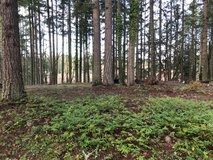 Shy 1/2 Acre in Desirable Clearwood! Crest Lane in Fort Lewis, Washington