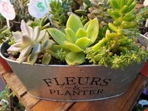 Inexpensive succulent arrangements and 100's of succulents lower than in Camp Pendleton, California
