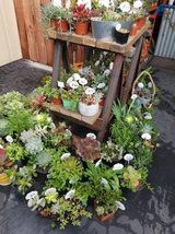 Healthy variety of succulents,arrangements and plants at lower prices in Camp Pendleton, California