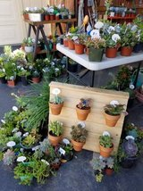 Lower than retail variety of succulents and drought tolerant plants in Camp Pendleton, California