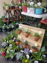 Succulents,drought tolerant plants and arrangements at low prices in Camp Pendleton, California